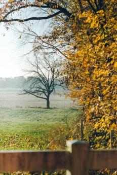 Indiana Landscape